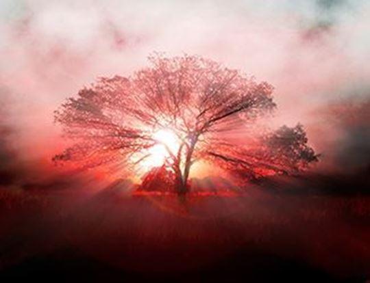 emociones-y-espiritualidad-4-800x503